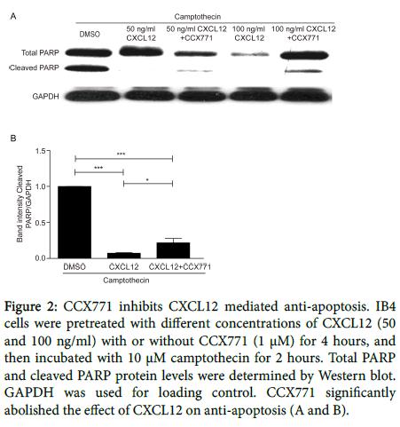 molecular-genetic-medicine-mediated-anti-apoptosis