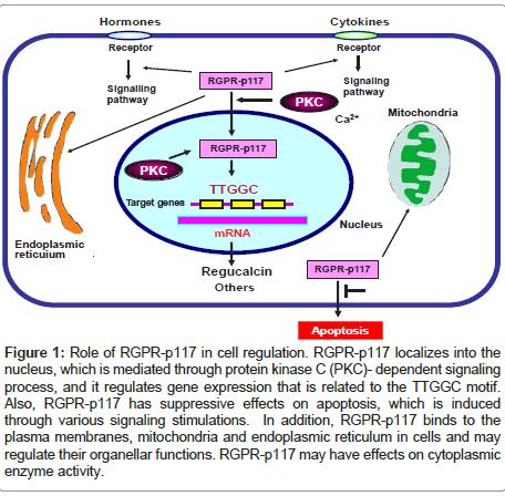 molecular-genetic-medicine-membranes-mitochondria-endoplasmic