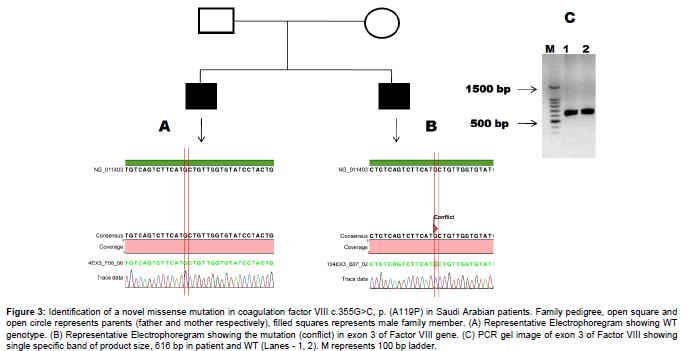molecular-genetic-medicine-novel-missense-mutation