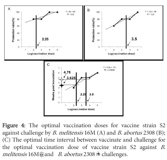 molecular-genetic-medicine-optimal-vaccination-doses-vaccine-strain