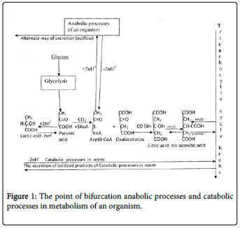 molecular-genetic-medicine-point-bifurcation-anabolic