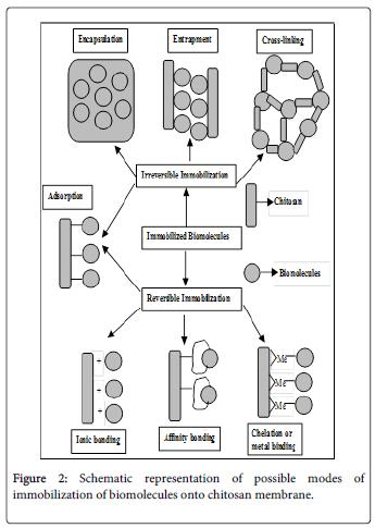molecular-genetic-medicine-possible-modes-immobilization