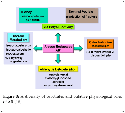 molecular-genetic-medicine-putative-physiological-roles