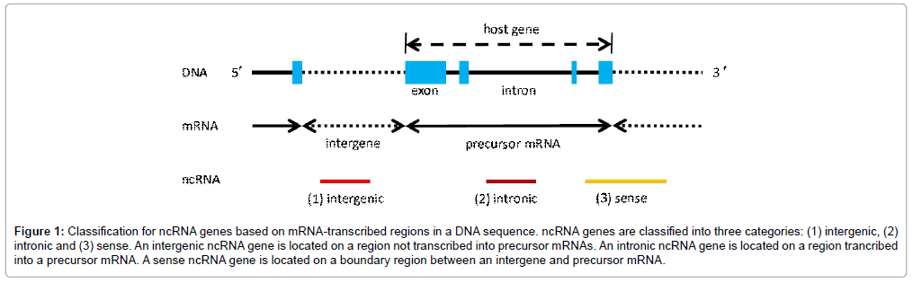 molecular-genetic-medicine-region-trancribed-precursor