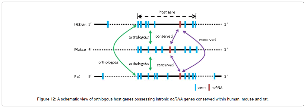 molecular-genetic-medicine-schematic-view-orthlogous-host-genes