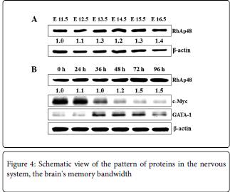 molecular-genetic-pattern-proteins