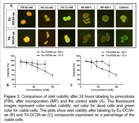 molecular-imaging-dynamics-Comparison-islet-viability