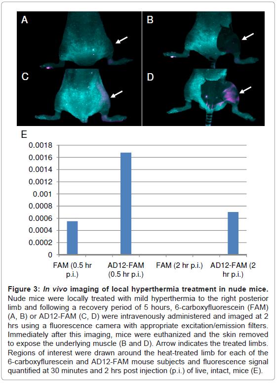 molecular-imaging-dynamics-hyperthermia-recovery-carboxyfluorescein