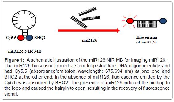 molecular-imaging-dynamics-illustration-imaging-biosensor