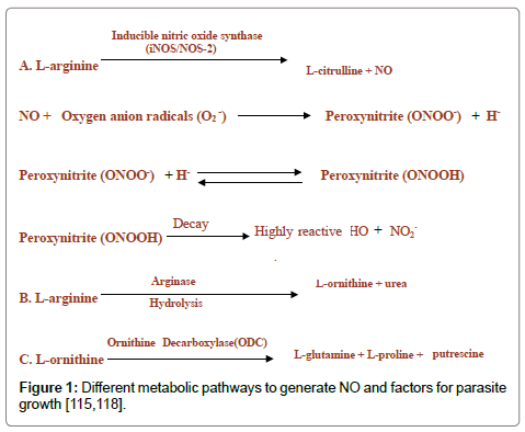 molecular-immunology-metabolic-pathways
