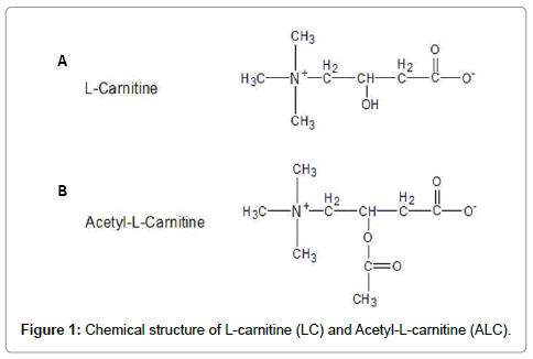 molecular-pharmaceutics-organic-L-carnitine
