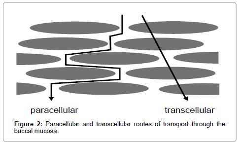 molecular-pharmaceutics-organic-transcellular-routes