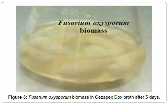 nanomedicine-biotherapeutic-discovery-Cezapex-Dox