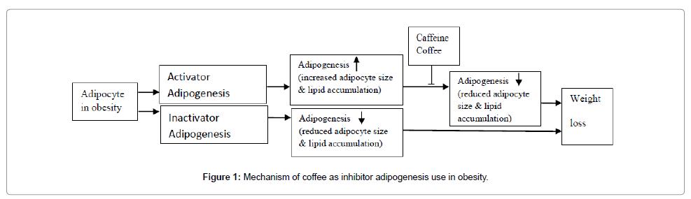 nanomedicine-nanotechnology-adipogenesis