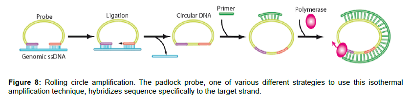 nanomedicine-nanotechnology-amplification-padlock-probe