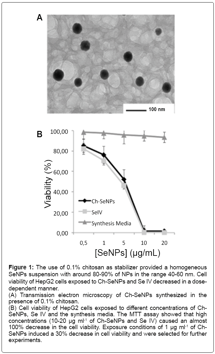 Effect of Chitosan-Stabilized Selenium Nanoparticles on Cell