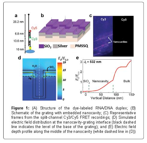 nanomedicine-nanotechnology-dye-labeled-duplex