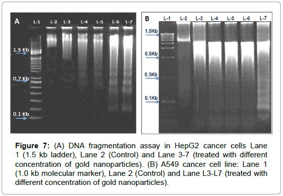 nanomedicine-nanotechnology-fragmentation-cancer-cells