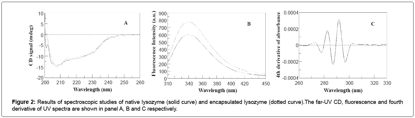 nanomedicine-nanotechnology-lysozyme