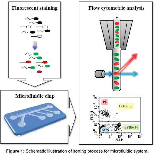 nanomedicine-nanotechnology-process-microfluidic-system