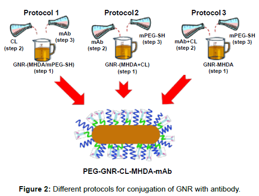 nanomedicine-nanotechnology-protocols-conjugation-antibody