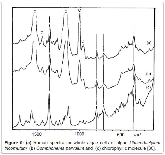 nanomedicine-nanotechnology-raman-spectra-chlorophyll