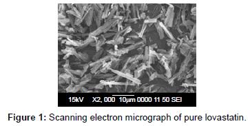 nanomedicine-nanotechnology-scanning-electron-pure-lovastatin