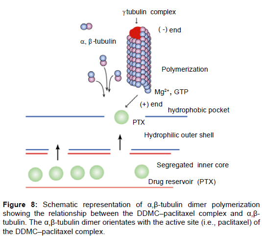 nanomedicine-nanotechnology-tubulin-dimer-polymerization