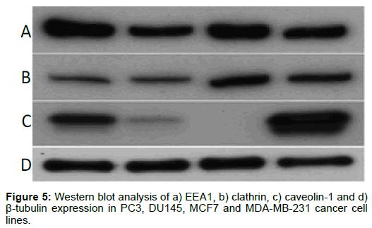 nanomedicine-nanotechnology-western-clathrin-caveolin