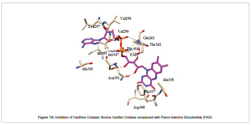 natural-products-chemistry-research-Inhibition-Xanthine-Oxidase