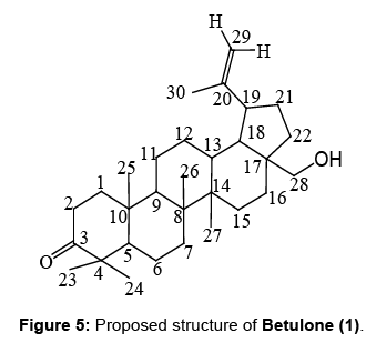 natural-products-chemistry-research-Proposed-structure-Betulone