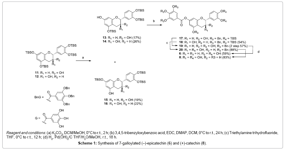 natural-products-chemistry-research-Synthesis-galloylated-epicatechin-catechin