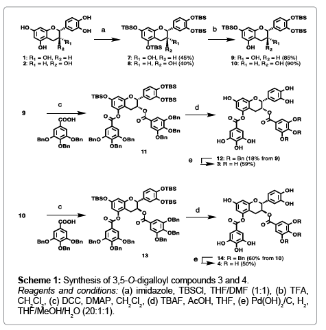 natural-products-chemistry-research-digalloyl-compounds