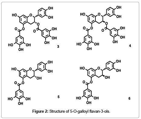 natural-products-chemistry-research-galloyl-flavan
