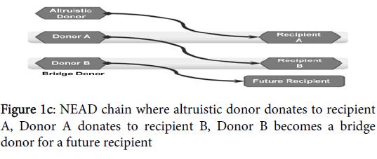 nephrology-therapeutics-chain-altruistic-donor