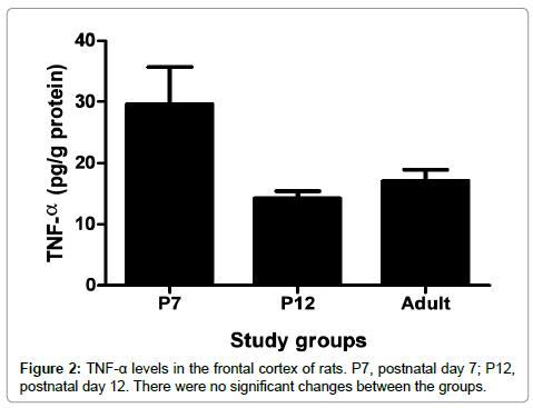 neurochemistry-neuropharmacology-frontal-cortex-rats