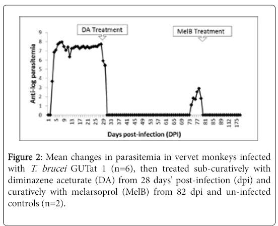 neuroinfectious-diseases-vervet-monkeys
