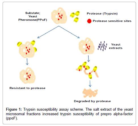 neurology-neurophysiology-Trypsin-susceptibility