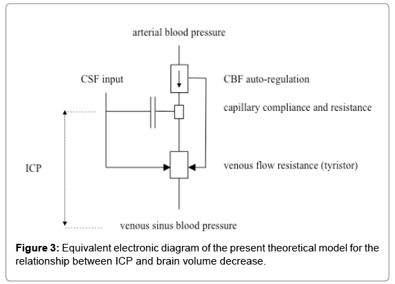 neurology-neurophysiology-theoretical-model