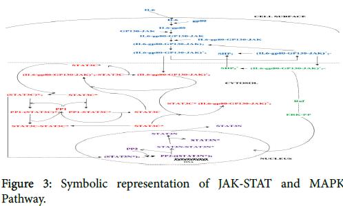 nuclear-medicine-Symbolic-representation-JAK-STAT