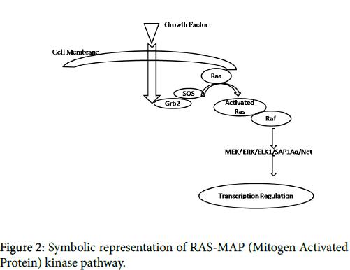nuclear-medicine-Symbolic-representation-RAS-MAP