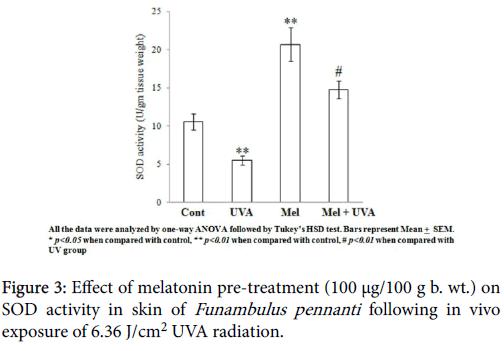 nuclear-medicine-radiation-therapy-Funambulus-pennanti