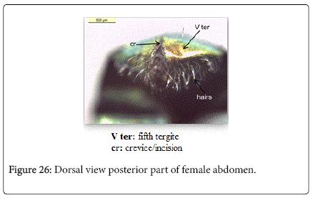 nursing-forensic-studies-Dorsal-view-posterior-part