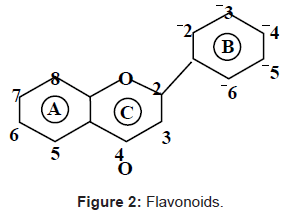 nutrition-food-sciences-Flavonoids