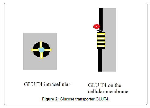 nutrition-food-sciences-Glucose-transporter