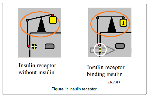 nutrition-food-sciences-Insulin-receptor