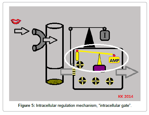 nutrition-food-sciences-Intracellular-regulation