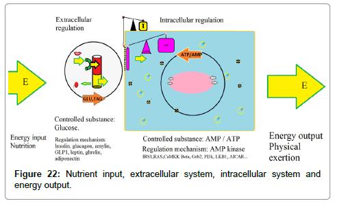 nutrition-food-sciences-Nutrient-input