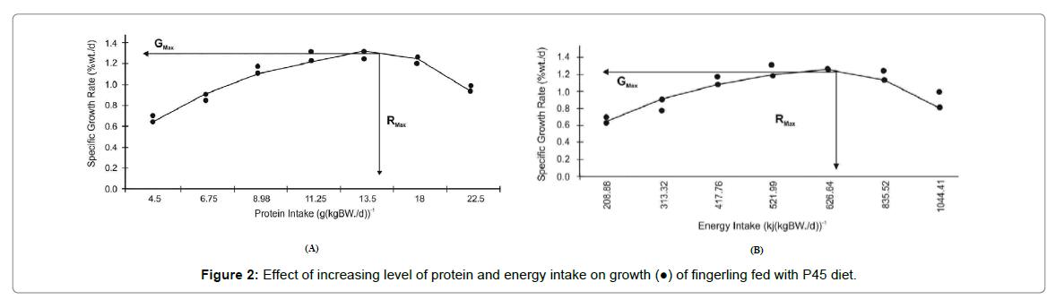 nutrition-food-sciences-energy-intake