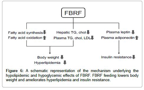 nutrition-food-sciences-schematic-representation